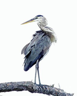 Photograph - Great Blue Heron 5 by Lizi Beard-Ward