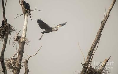 Photograph - Great Blue Heron - 6 by David Bearden