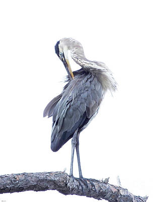 Photograph - Great Blue Heron 6 by Lizi Beard-Ward