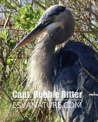 Photograph - Great Blue Heron 8056 by Captain Debbie Ritter