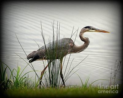 Great Blue Heron - Afternoon Walk 2 Art Print