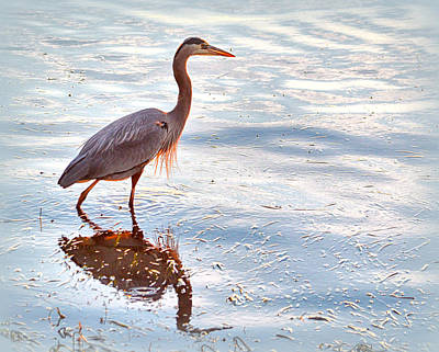 Photograph - Great Blue Heron by AJ Schibig