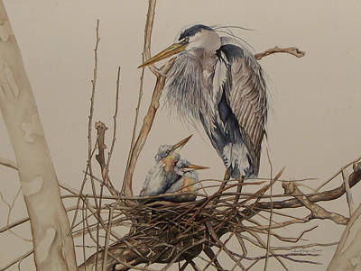 Great Blue Heron And Chicks Art Print