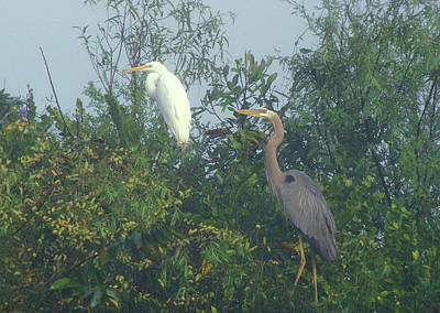 Photograph - Great Blue Heron And Great Egret  by John Burk