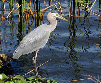 Photograph - Great Blue Heron by April Wietrecki Green