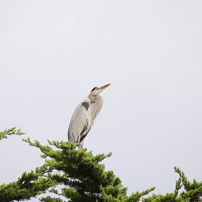 Photograph - Great Blue Heron by Art Block Collections