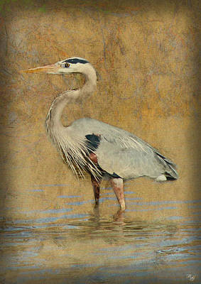 Photograph - Great Blue Heron Art by Ron Grafe