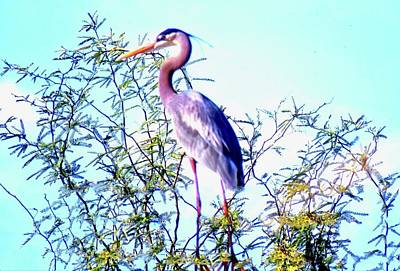 Photograph - Great Blue Heron - Artistic 1 Bright by Judy Kennedy
