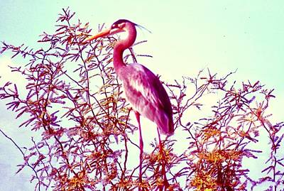 Photograph - Great Blue Heron - Artistic 2 by Judy Kennedy