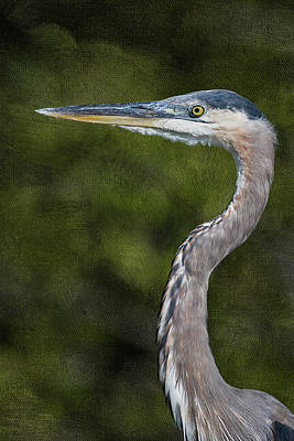 Photograph - Great Blue Heron Artistic Portrait by Dawn Currie