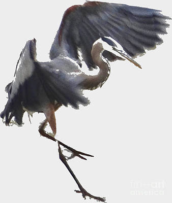 Photograph - Great Blue Heron As Watercolor V2 by Christopher Plummer