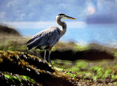 Photograph - Great Blue Heron At Low Tide by Terry Elniski