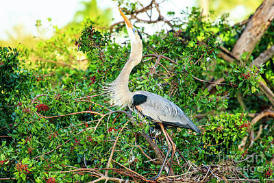 Photograph - Great Blue Heron At Rookery by Ben Graham