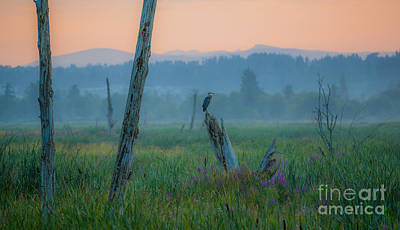 Photograph - Great Blue Heron At Sunrise by Calvin Fannin