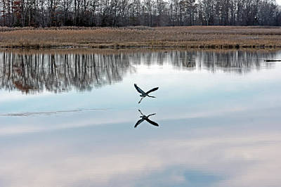Photograph - Great Blue Heron At Take-off by Jennifer Nelson