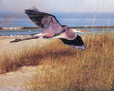 Photograph - Great Blue Heron At The Beach by Brian Tarr