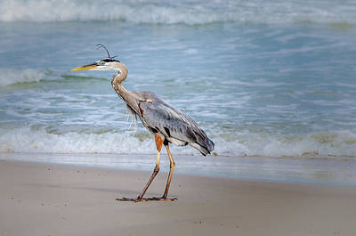 Photograph - Great Blue Heron Beach Stroll by Debra Martz