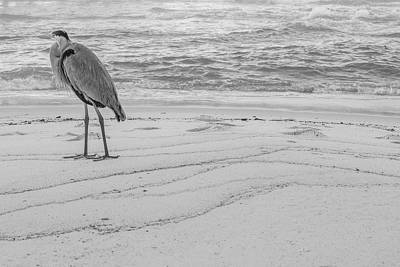 Photograph - Great Blue Heron Black And White  by John McGraw