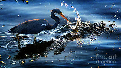 Photograph - Great Blue Heron  by Bob Christopher