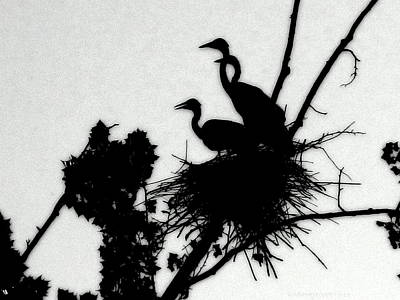 Photograph - Great Blue Heron Chicks Silhouette by Kathy Barney