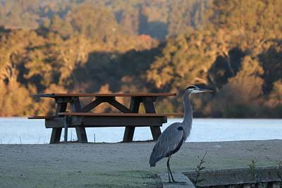 Photograph - Great Blue Heron  by Christy Pooschke