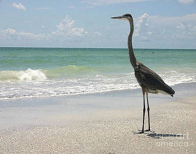 Photograph - Great Blue Heron - Coastal Florida by Scott D Van Osdol