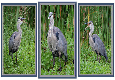 Plantations Digital Art - Great Blue Heron Collage by DigiArt Diaries by Vicky B Fuller