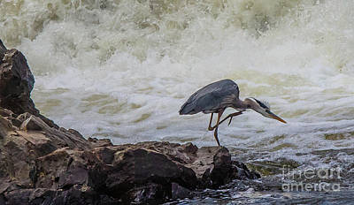 Photograph - Great Blue Heron by David Bishop