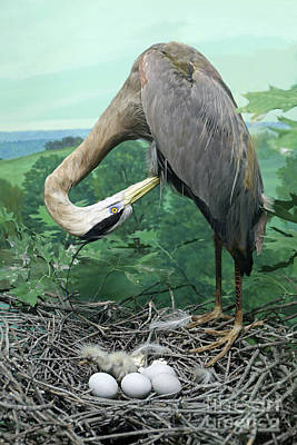 Photograph - Great Blue Heron Diorama by Kevin McCarthy