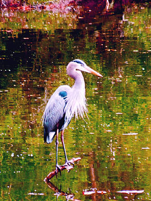 Photograph - Great Blue Heron  by Don Wright