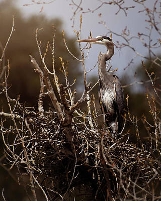 Photograph - Great Blue Heron by Erica Kinsella