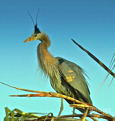 Great Blue Heron Extreme Original by Gus McCrea