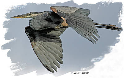 Great Blue Heron Flight Art Print by Larry Linton