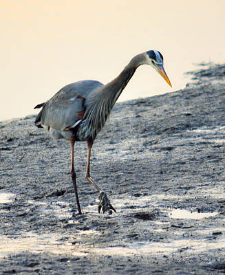 Excel Photograph - Great Blue Heron Hunting For Dinner by Brian Tada