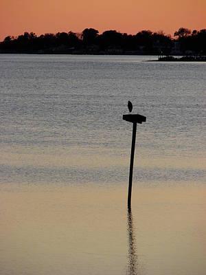 Photograph - Great Blue Heron I by Brett Winn