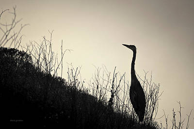 Photograph - Great Blue Heron I Toned by David Gordon