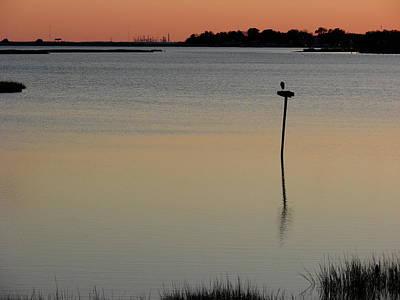 Photograph - Great Blue Heron II by Brett Winn