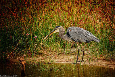 Photograph - Great Blue Heron IIi by Kathi Isserman