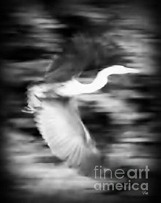 Photograph - Great Blue Heron In Black And White by Judy Via-Wolff