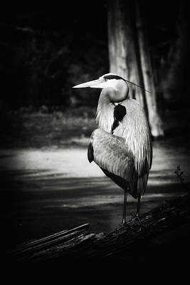 Photograph - Great Blue Heron In Black And White by Michael McStamp