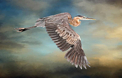 Photograph - Great Blue Heron In Flight by HH Photography of Florida