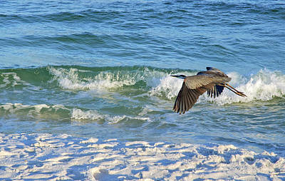 Photograph - Great Blue Heron In Flight by Marie Hicks
