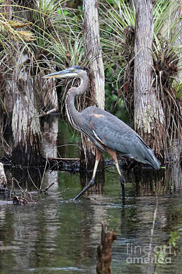 Photograph - Great Blue Heron In The Swamp by Carol Groenen
