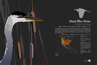 Digital Art - Great Blue Heron Infographic by Marcus England