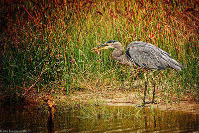 Photograph - Great Blue Heron Iv by Kathi Isserman