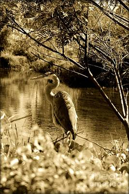 Photograph - Great Blue Heron by Janice Spivey