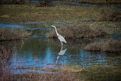 Photograph - Great Blue Heron by Jason Coward