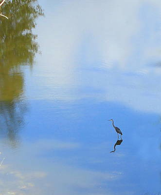 Photograph - Great Blue Heron by Jim Sauchyn