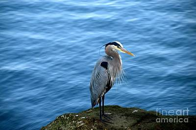 Photograph - Great Blue Heron by Johanne Peale