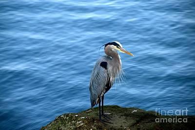 Photograph - Great Blue Heron by Johanne Peale